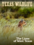 The Lions of West Texas by Mary O. Parker