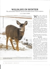 Winter Wildlife in Texas by Mary O Parker